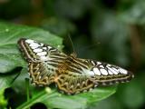 2007-09-23 Butterfly