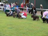 Leicestershire Gundog