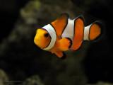 Nanoreef - Fish & Livestock ~ Joys and Tribulations