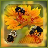 Bumble Bee Composite
