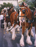 1992 - Budweiser Clydesdales and the beer wagon