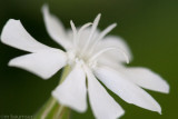 Little White Flower