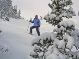 In the Trees at Breckenridge