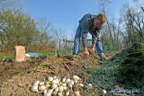 Onion Planting Time