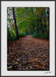Autumn path_DS26447.jpg