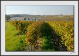 Champigny Vineyards_DS26540.jpg