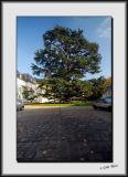 Cypress in France_DS26349.jpg