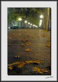 Leaves_DS26492.jpg