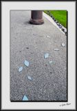 Pavement Leaves_DS26380.jpg