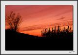 Vineyard Silhouette_DS26302.jpg