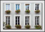 Window Box_DS26418.jpg