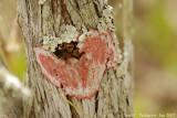 Lichen on Cypress Tree