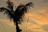 Palm at Sunset on Captiva