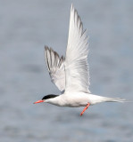 2007 /8 BIRDS