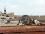 Cats on a Hot Tin Roof