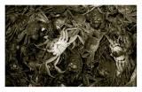Street Crabs