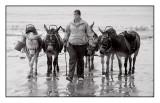 Wet Donkeys