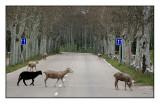 Madrid Flock