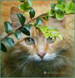 Hobbes the spy cat