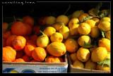 Lemons & Tangerines