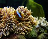 Storefront Aquarium - Cairns, Australia