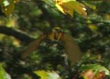 oiseau inconnu en vol