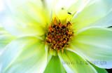 Blume / Flower (4909)