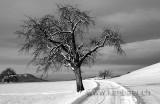 Baum / Tree 0072.jpg