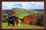 Im Herbst / In Fall (7505)