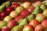 Fruechte / Fruit (0322)