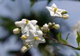 Blume / Flower (4062)