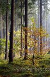 Im Wald / In The Forest (6763)