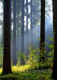 Im Wald / In The Forest (6773)
