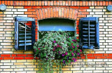 Fenster / Window (7344)