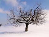Baum im Winter (05359)