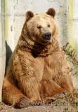 Baer / Bear (9966)