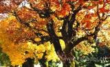 Herbst / Autumn (8376)