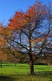 Baum / Tree (7559)