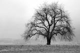 Baum im Fruehling (00164)