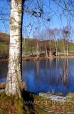 Weiher / Pond (9903)