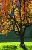 Baum / Tree (5749)