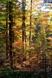 Wald / Forest (7402)