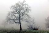 Nebel / Fog (04388)