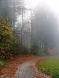 Nebel / Fog (00756)