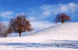 Der erste Schnee / First Snow (8130)