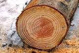 Holz / Wood (9787)