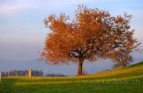 Baum im Herbst (9452)