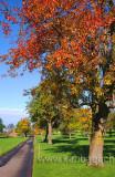 Herbstlaub (5572)