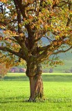 Baum im Herbst (6639)