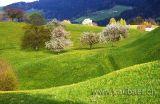 Frühlingswiese mit blühenden Bäumen (2315)